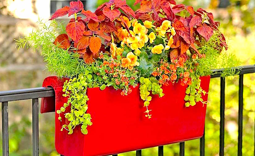 Container gardening growing plants in difficult conditions using various containers - Growing petunias pots balconies porches ...