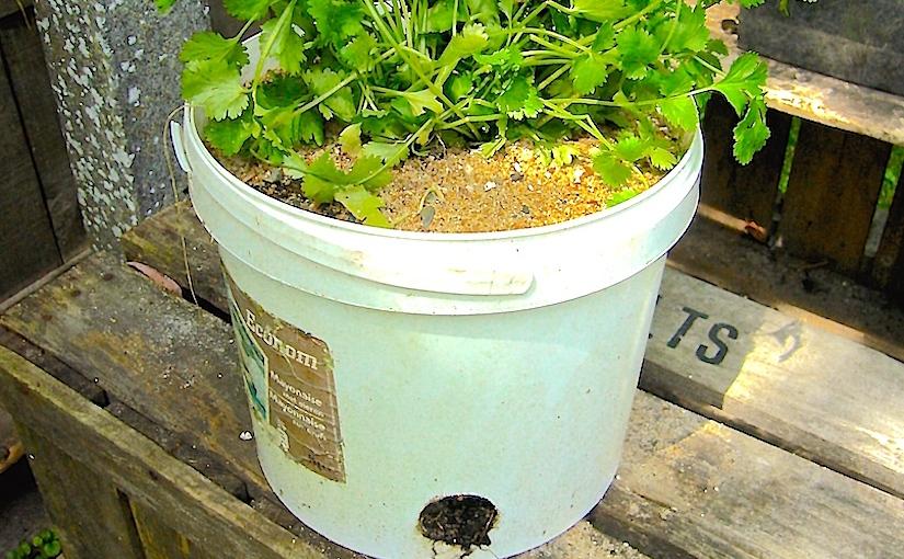 Bucket vegetables