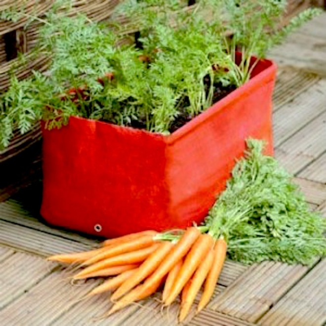 https://www.quickcrop.co.uk/blog/wp-content/uploads/2015/02/grow-carrots-in-containers-300x300.jpg