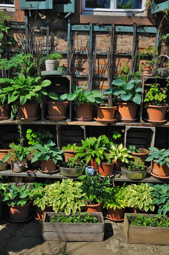 A Hosta container garden - http://www.daviddomoney.com/wp-content/uploads/2015/04/hosta-garden-Bertold-Werkmann.jpg