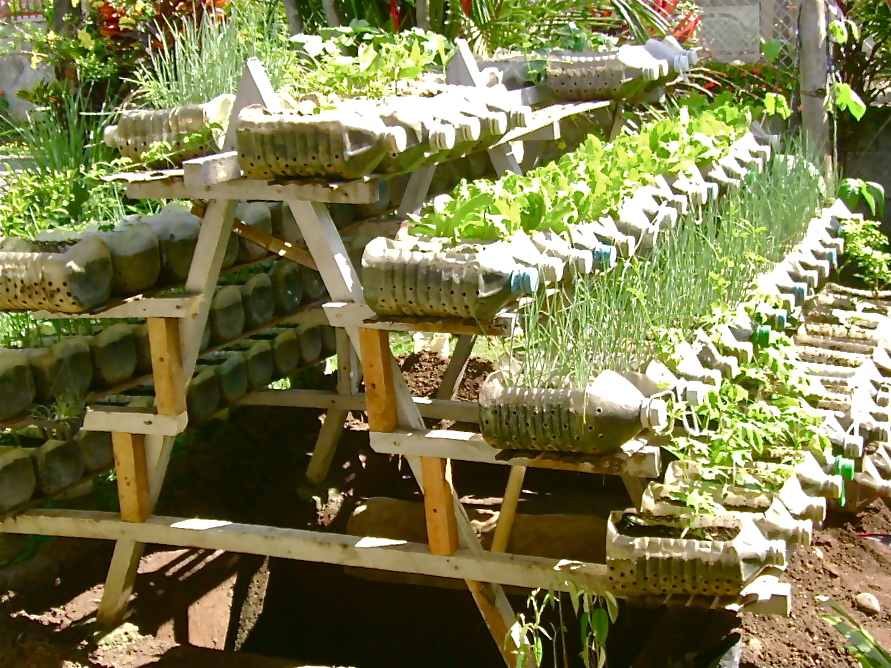 Riser with ve ables and herbs growing in recycled bottles Jojo ROM The Philippines