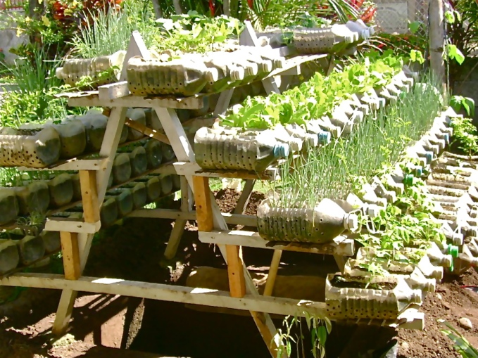 Riser with vegetables and herbs growing in recycled bottles - Photo Jojo ROM (The Philippines)  56269_1483085875405_1181604134_31159685_1301366_o.jpg