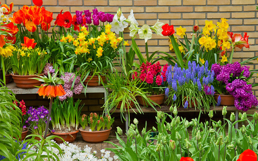 http://www.daviddomoney.com/wp-content/uploads/2014/09/spring-bulb-containers-pots.jpg