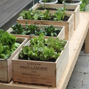 Wooden Wine Boxes make great little planters for herbs and salads. - https://www.quickcrop.co.uk/blog/wp-content/uploads/2015/02/Wine-box-planter-salad-garden-300x300.jpg