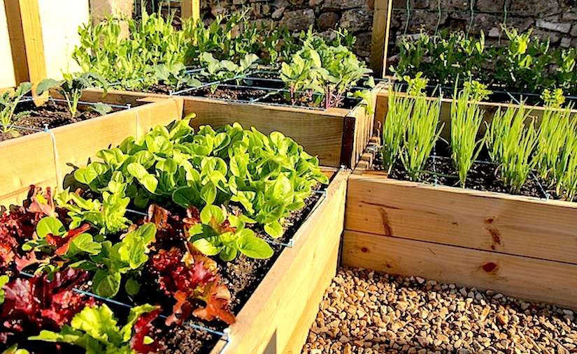 https://www.quickcrop.ie/blog/wp-content/uploads/2015/06/Square-foot-garden-rathdooney.jpg