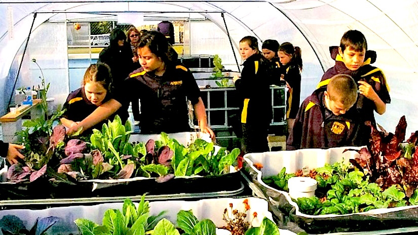 A school garden in the schoolpool