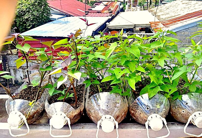 * Balcony - Bottles - Sweet potato - Photo Edna Palomares - 574655_3430734820619_1361214987_n.jpg