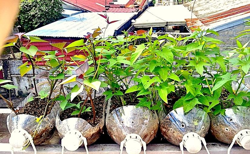 Grow salad greens on yourbalcony