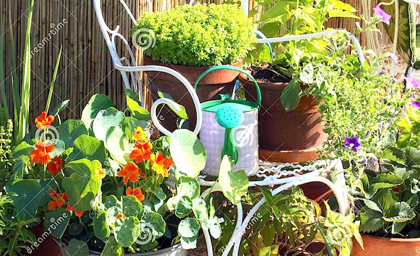 Jardinagem do recipiente(Portuguese)