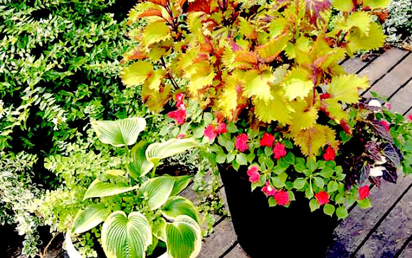 Shaded container gardening