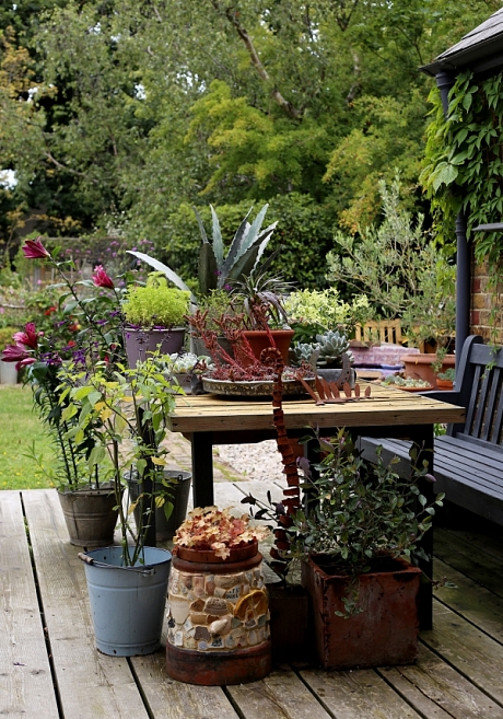 May006436. The Sunday Telegraph. View of plants in writer Francine Raymond's garden in Whitstable, Kent, for an article about planting in containers. Tuesday August 11, 2015. - http://i.telegraph.co.uk/multimedia/archive/03424/Pot_plants_2_Clara_3424989c.jpg