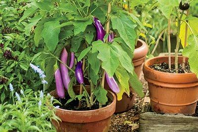 http://cdn.balconygardenweb.com/wp-content/uploads/2015/09/terrace-vegetable-garden-2_mini.jpg