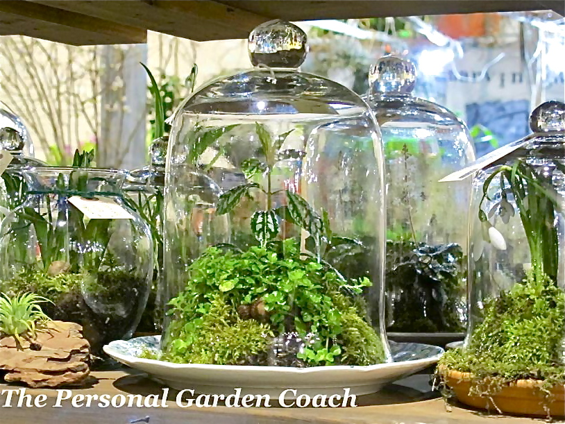 Some do it in glass containers (terrariums)