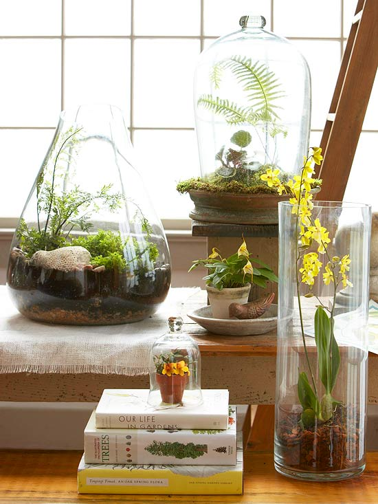 * Terrarium - Photo BHG - 101831979.jpg.rendition.largest.jpg