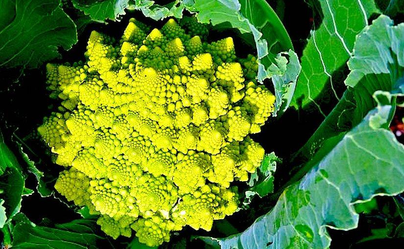If you likebroccoli