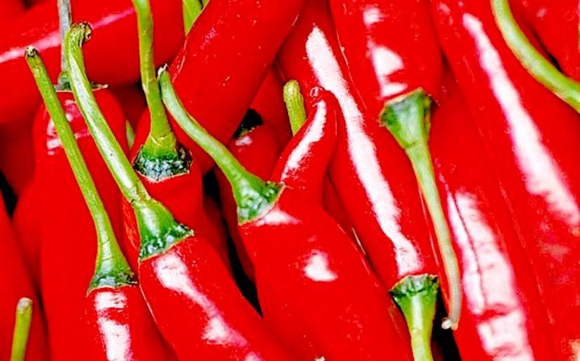 http://www.telegraph.co.uk/content/dam/gardening/2016/01/05/red-chilli-large_trans++qVzuuqpFlyLIwiB6NTmJwfSVWeZ_vEN7c6bHu2jJnT8.jpg