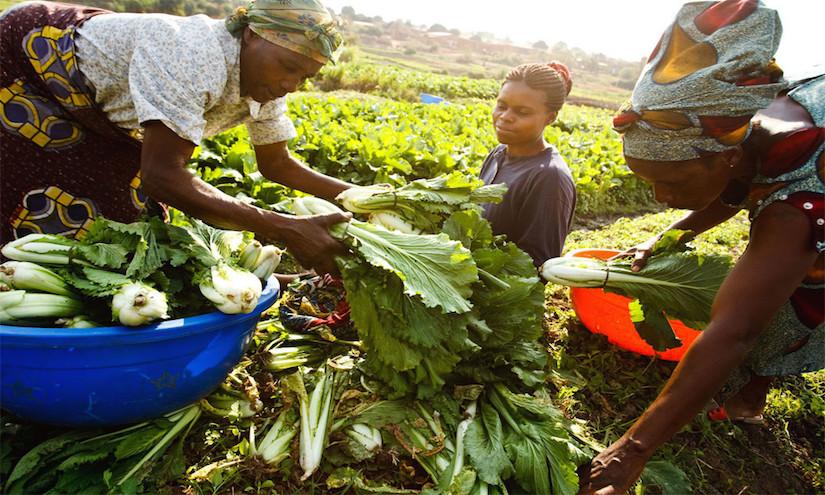 10,000 Gardens inAfrica