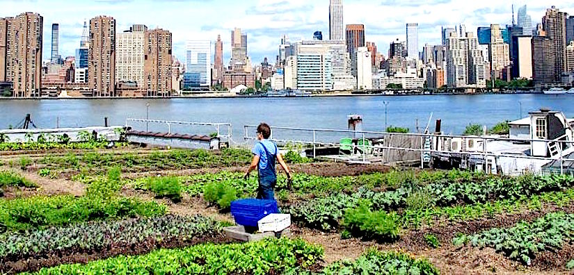 Urban gardening and rooftop farming