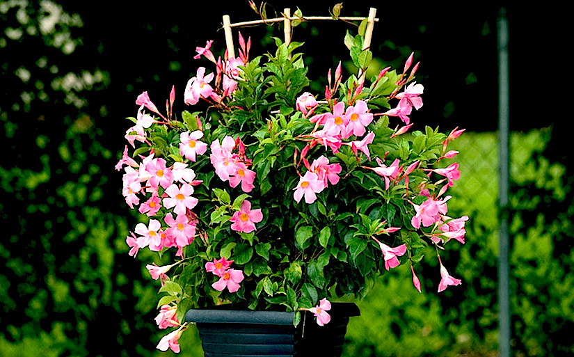 You will need to find somewhere safe to store your tropcal plants for thewinter.