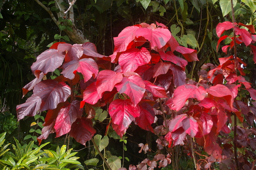 http://gardendrum.com/wp-content/uploads/2016/10/With-adequate-food-and-water-Macrophylla-is-outstanding.jpg