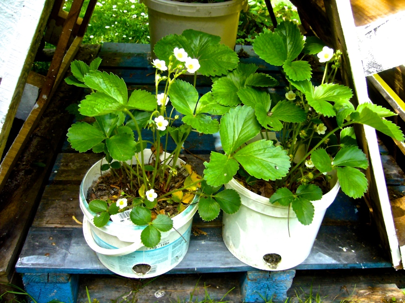 Container gardening deserves to conquer the entire globe