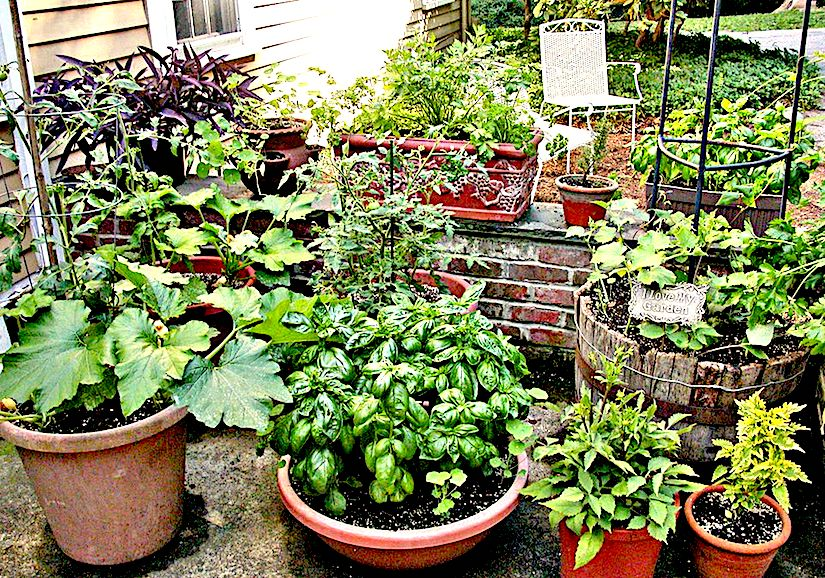 ... Gardening · Vegetables In Containers